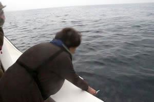ファミリーホール湘南台の海洋散骨、開式の様子