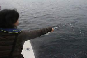ファミリーホール湘南台の海洋散骨、献酒の様子